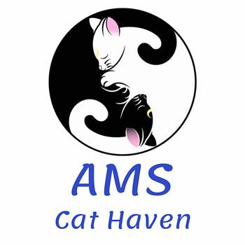 AMS Cat Haven